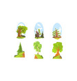 deciduous and coniferous trees beautiful summer vector image vector image