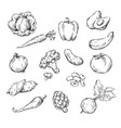 drawing of various vegetables vector image vector image