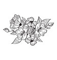 hand drawing and sketch rosa canina flower vector image