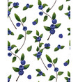 natural seamless pattern of blueberry branch vector image vector image