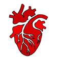 anatomical heart human heart hand drawn