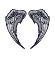 black and white isolated wings vector image