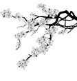 branch of cherry tree vector image vector image
