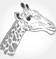 giraffe isolated black contour on white background vector image vector image