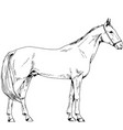 race horse without a harness drawn in ink by hand vector image vector image
