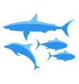 Shark Tuna Dolphin vector image vector image