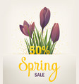spring banner with crocus vector image