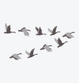 a flock ducks a cartoon flock birds vector image vector image