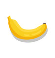 banana tasty fruit sketch isolated icon vector image vector image