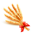 Ears of wheat with red bow vector image vector image