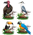 Four different kinds of wild birds vector image vector image