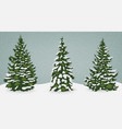 snow trees set on isolated background christmas vector image vector image