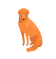 attractive clever golden retriever dog breed vector image