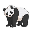 color image of a panda isolated object vector image vector image