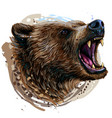 growling bear color portrait a angry bear vector image vector image