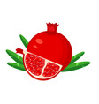 red pomegranate fruit and slice pomegranate vector image