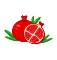 guicy red pomegranate fruit whith leaf vector image vector image