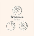 persimmon fruit graphic drawing sketch of vector image vector image