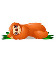three-toed sloth or family bradypodidae lies and vector image