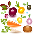 vegetable root vector image