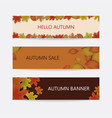 autumn banner decor with autumn maple leaves vector image vector image