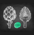 chalk sketch of artichokes vector image