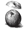 esopus apple vintage vector image vector image