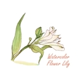 Watercolor flower Lily isolated vector image vector image