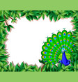 a peacock on nature border vector image vector image