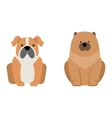Flat dog pet sitting cute vector image vector image