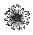 hand drawn chamomile vector image