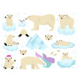 polar bears set teddy bear in arctic vector image
