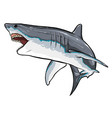 shark sketch graphics color picture vector image