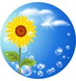sunflower logo vector image vector image