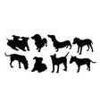 dog pet animal silhouettes vector image vector image
