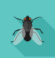 fly flat icon with long shadow vector image vector image