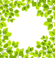 Leaves isolated vector image