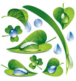 water drops with a leafs vector image vector image