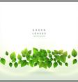 fresh green leaves background design vector image vector image