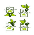 green olive leaves lettering compositions and oil vector image vector image