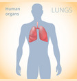 location of the lungs in the body the human vector image vector image