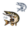 pike fish sketch isolated icon vector image vector image