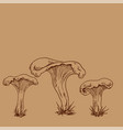 hand drawn outline of chanterelles vector image