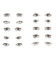 part of the male person s eyes and eyebrows vector image