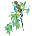 australian parakeet vector image