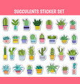cactus and other succulents stickers vector image