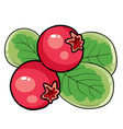 redberry on a bush with green leaves cartoon vector image vector image