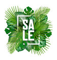 summer sale banner with tropical leaves vector image vector image