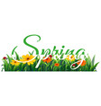 text letter spring banner vector image vector image