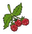 color image cartoon berry raspberry vector image vector image